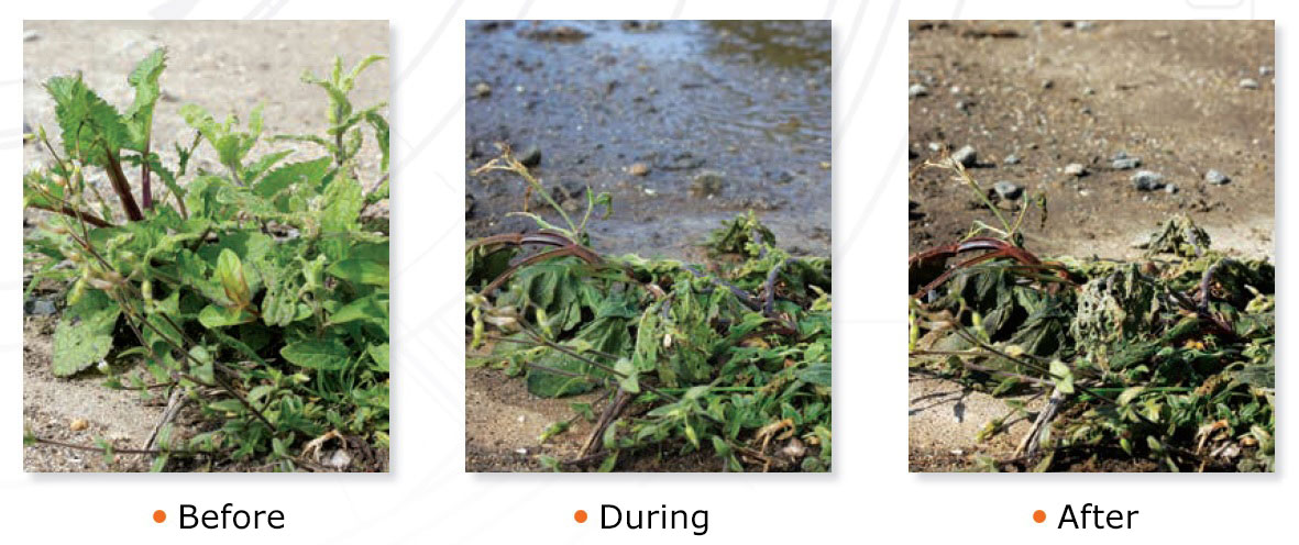 Principle of weeding with hot water